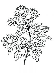 free printable daisy flower coloring pages