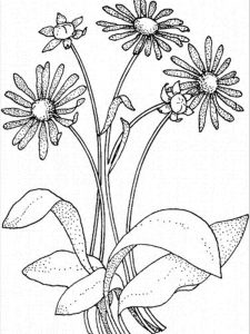 girl scout daisy flower coloring pages