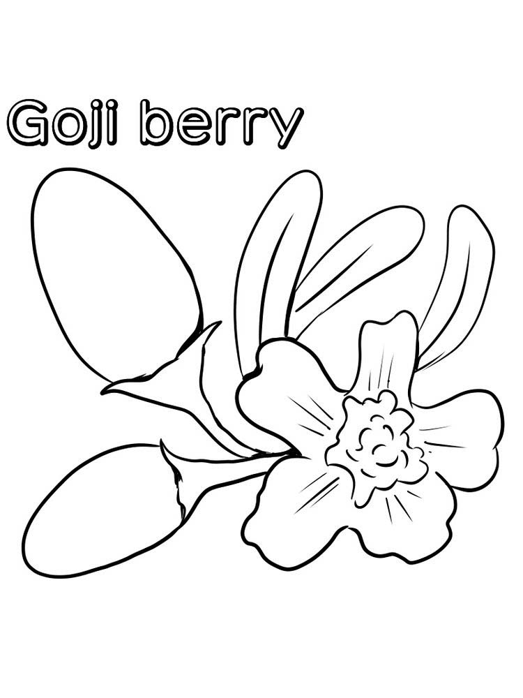 goji berry coloring images print