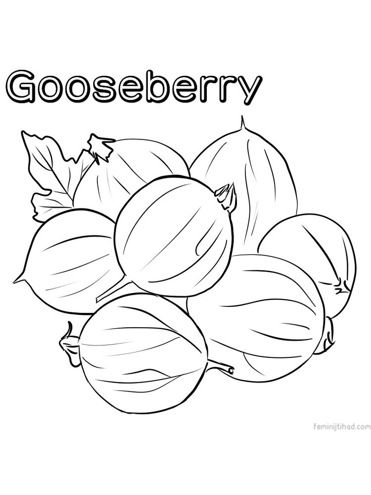 gooseberry coloring pictures print