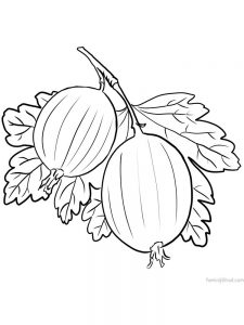 gooseberry coloring sheet download