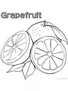 grapefruit coloring images