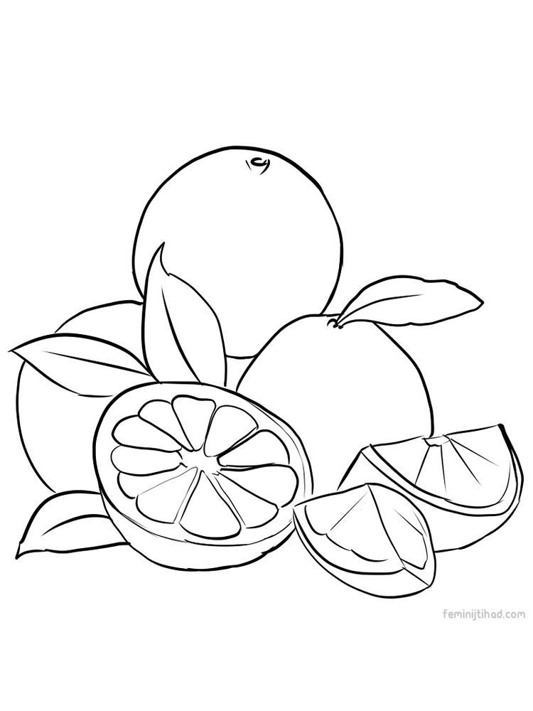 grapefruit coloring images free download