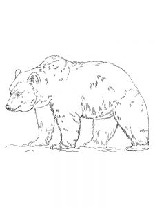 grizzly bear coloring pages free