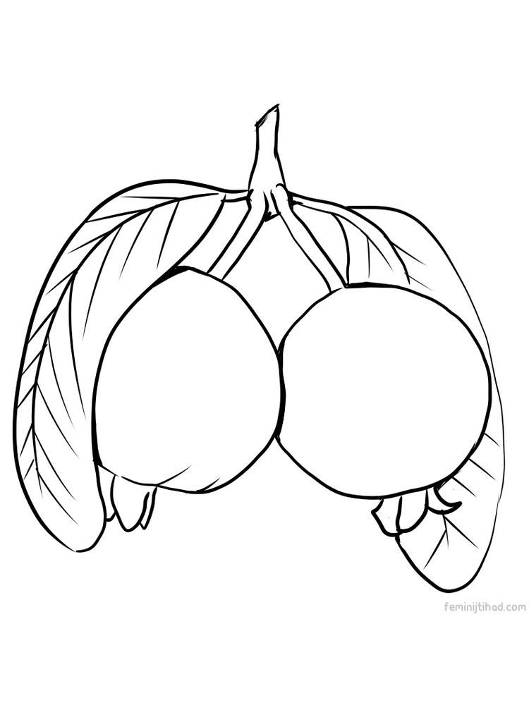 guava coloring sheet download