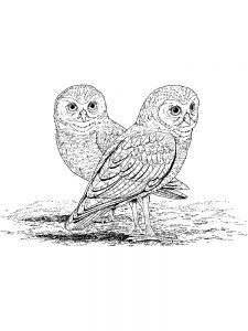 hard image coloring pages bird