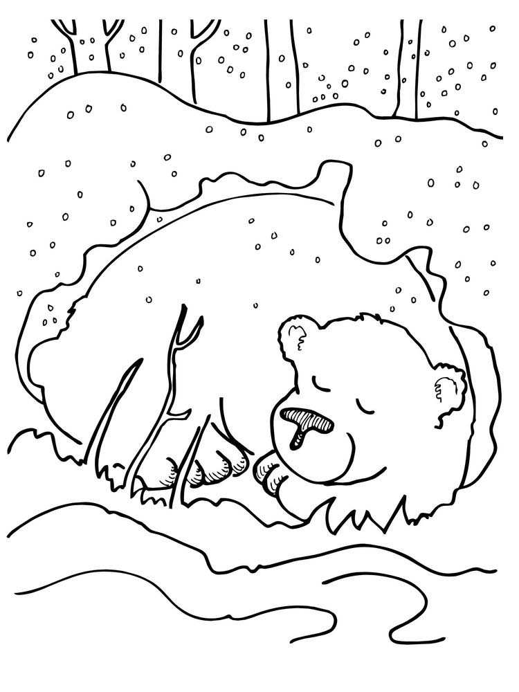 hibernating bear coloring pages