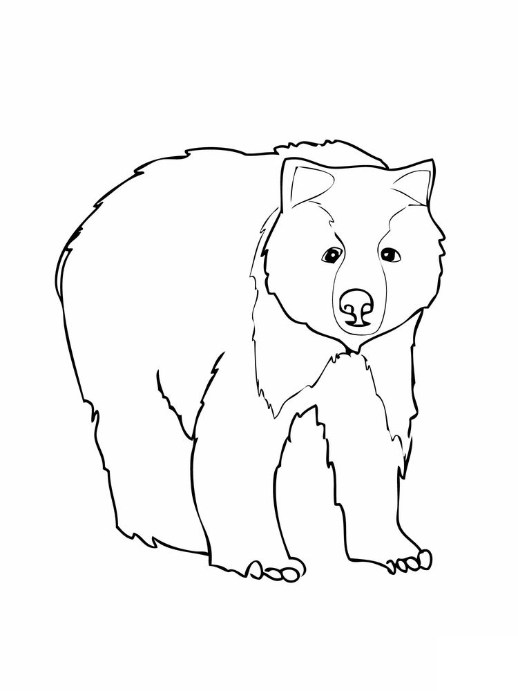 honey bear coloring pages