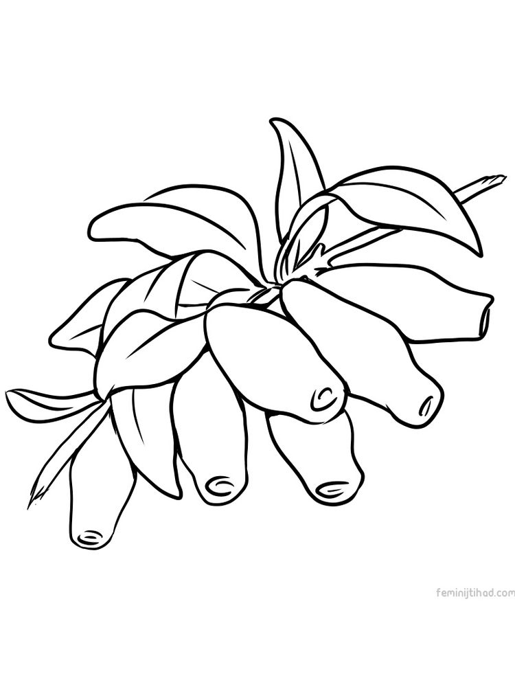 honeyberry coloring pictures print