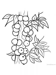 jaboticaba with leaves coloring page free