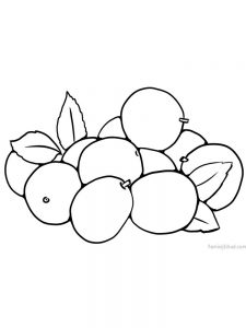 jujube coloring page printable