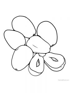 jujube coloring pages free
