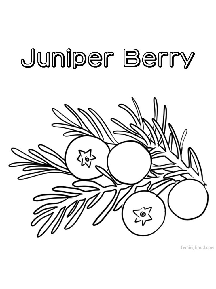 juniper berry coloring page printable
