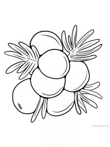 juniper berry images for coloring page