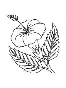 lima bean plant coloring page