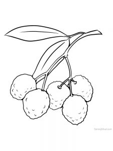 lychee coloring page download free
