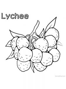 lychee coloring pages