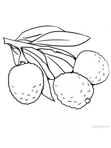 lychee picture for coloring print