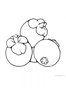 mangosteen bw for coloring print