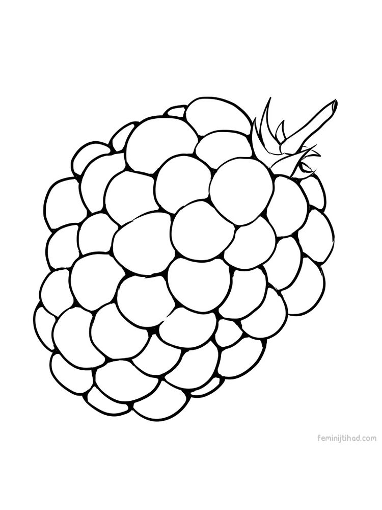 marionberries coloring pict print