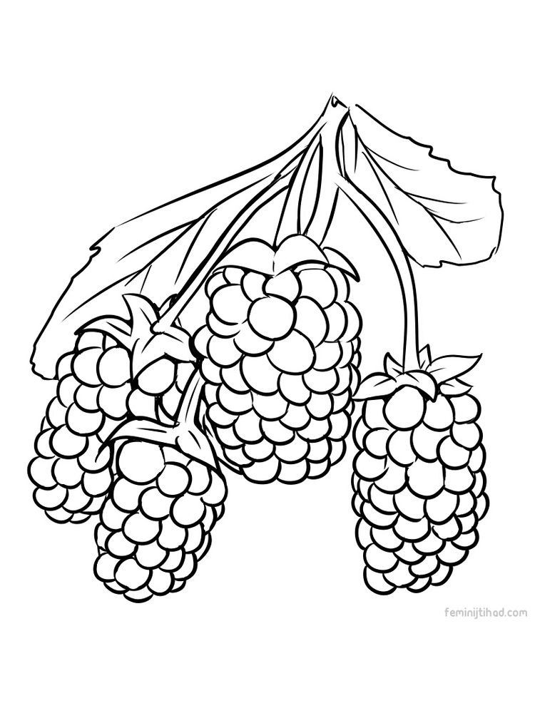 marionberry coloring image pdf