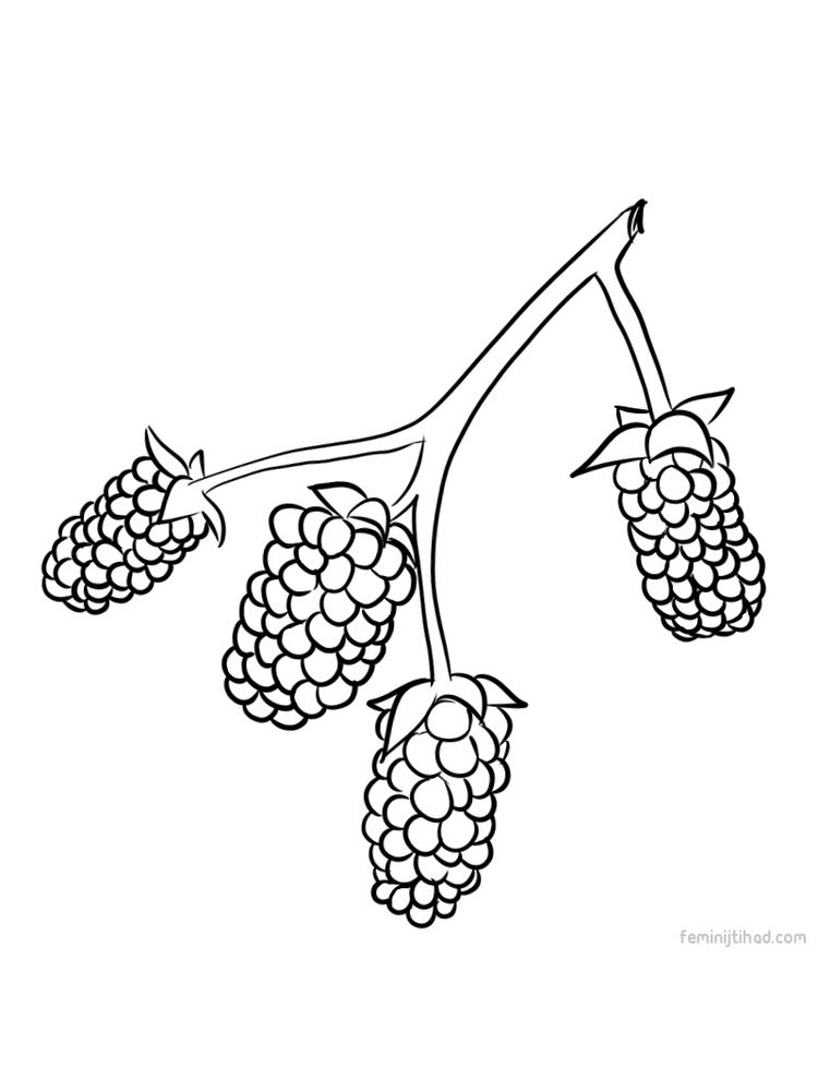 marionberry coloring images pdf