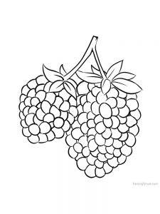 marionberry coloring picture download