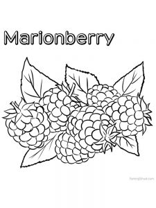 marionberry for coloring print