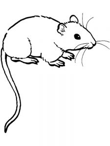 mouse coloring page with name