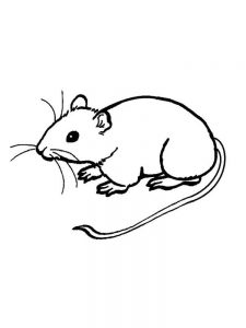 mouse eating cheese coloring page