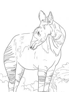 okapi coloring pages free