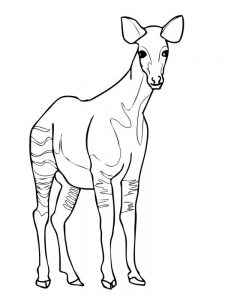 okapi coloring pages image
