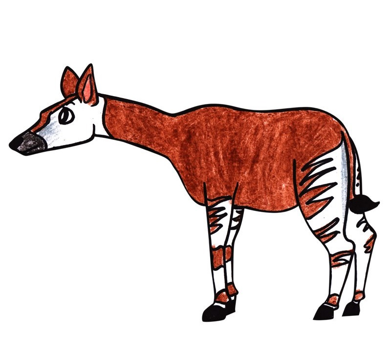 okapi coloring