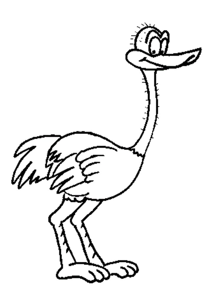 ostrich coloring page free