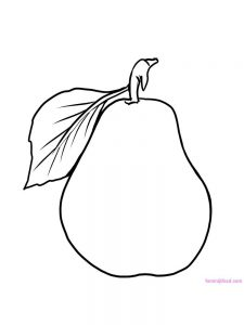 pear coloring pictures pdf