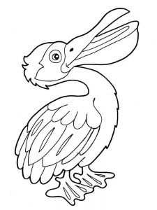 pelican coloring pages draw