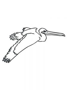 pelican coloring pages free