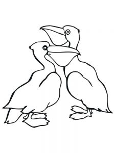 pelican coloring pages image