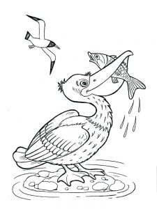pelican coloring pages new