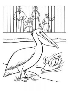 pelican coloring pages new image