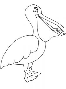 pelican coloring pages pdf