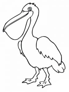 pelican coloring pages picture