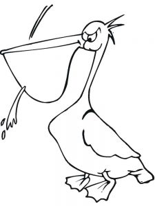 pelican coloring pages printable