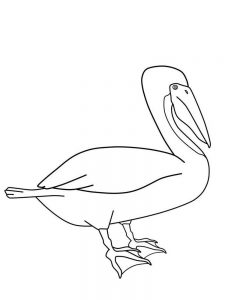 pelican coloring pages to free