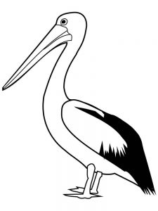 pelican coloring pages to print