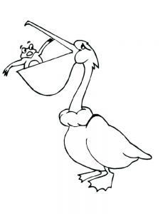 pelican coloring pages to pritable