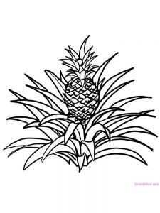 pineapple coloring image pdf