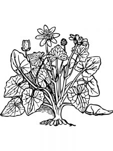 plant cell coloring page key