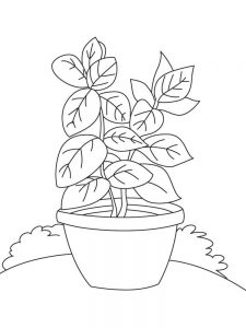 plant coloring pages for preschoolers