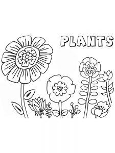 plant parts coloring pages